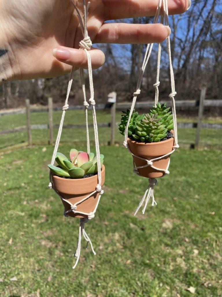 Handmade succulent plants by Praise the Sun Shop